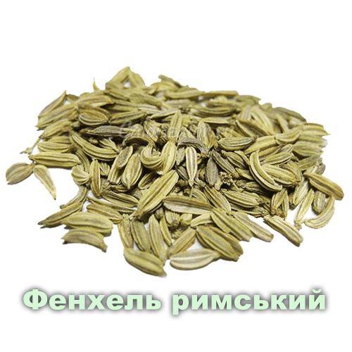 Фенхель римський / Foeniculum vulgare