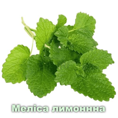 Меліса лимонна / Cymbopogon winterianus