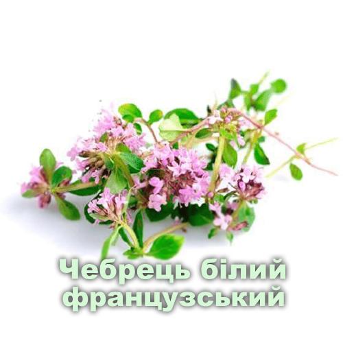 Чебрець білий французький / Thymus zygis
