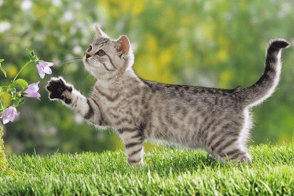 Ароматерапия для кошек