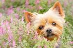 Ароматерапия для собак