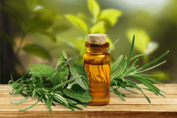Эфирные масла от домашних насекомых