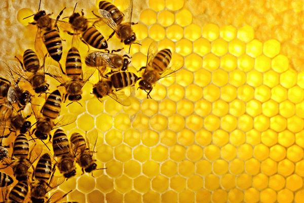Эфирные масла в пчеловодстве
