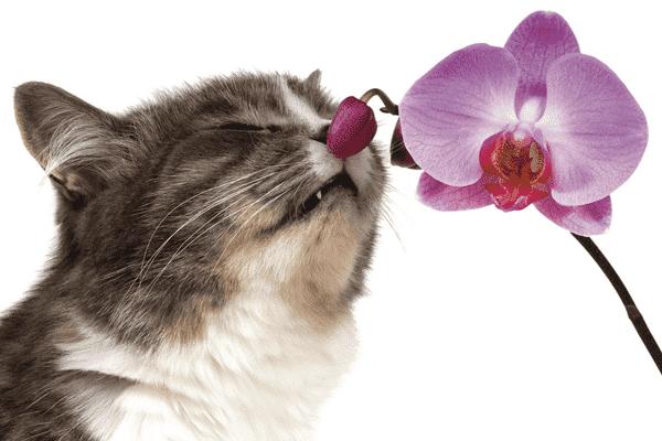 К запахам нужно принюхиваться