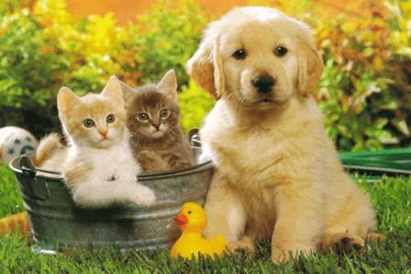 Лечение домашних животных эфирными маслами