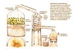 Методы получения эфирных масел
