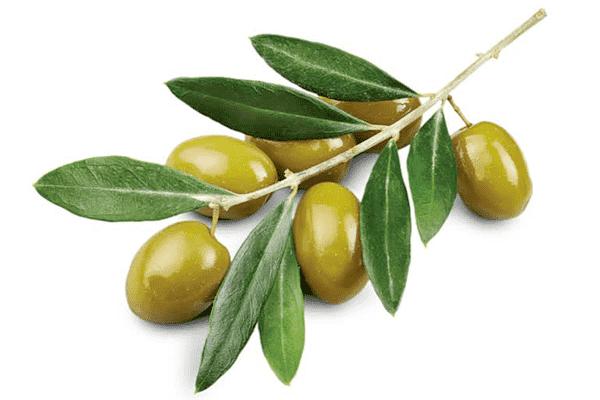Неожиданная польза экстракта оливковых листьев