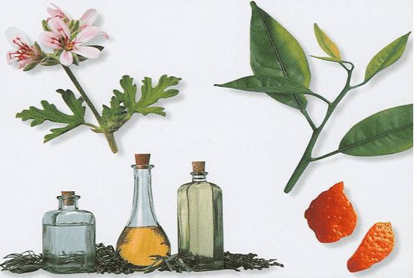 Понятие ароматерапии