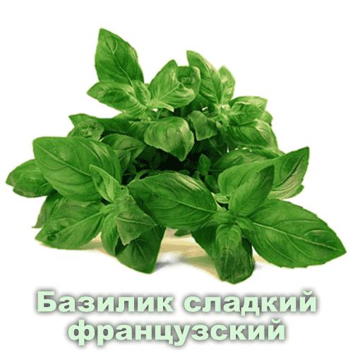 Базилик сладкий французский / Ocimum basilicum