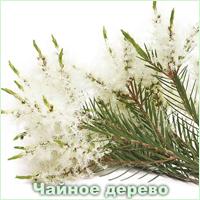 Эфирное масло чайного дерева Vivasan