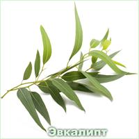 Эфирное масло эвкалипта Vivasan