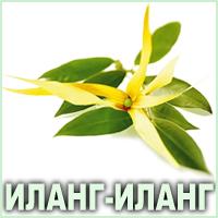 Эфирное масло иланг-иланга коморского Vivasan