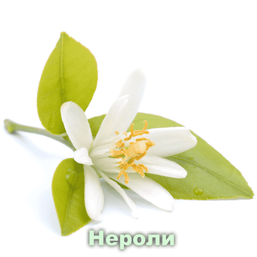 Нероли (Сладкий апельсин) / Citrus aurantium L.