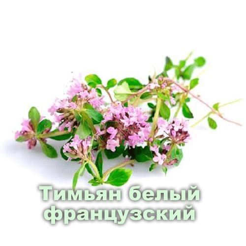 Тимьяна белый французский / Thymus zygis