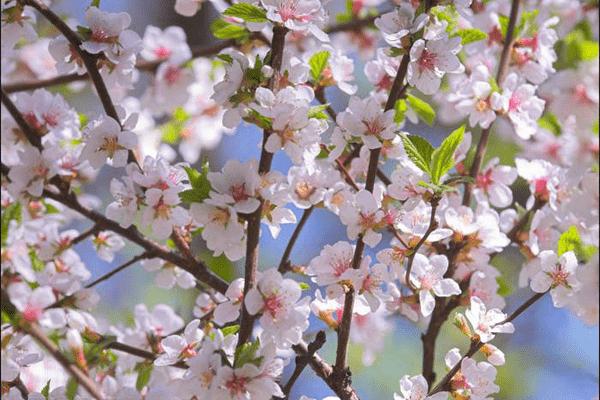Витамины весной